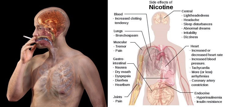 Attention Smokers: These Foods Will Flush Out Nicotine From Your Body